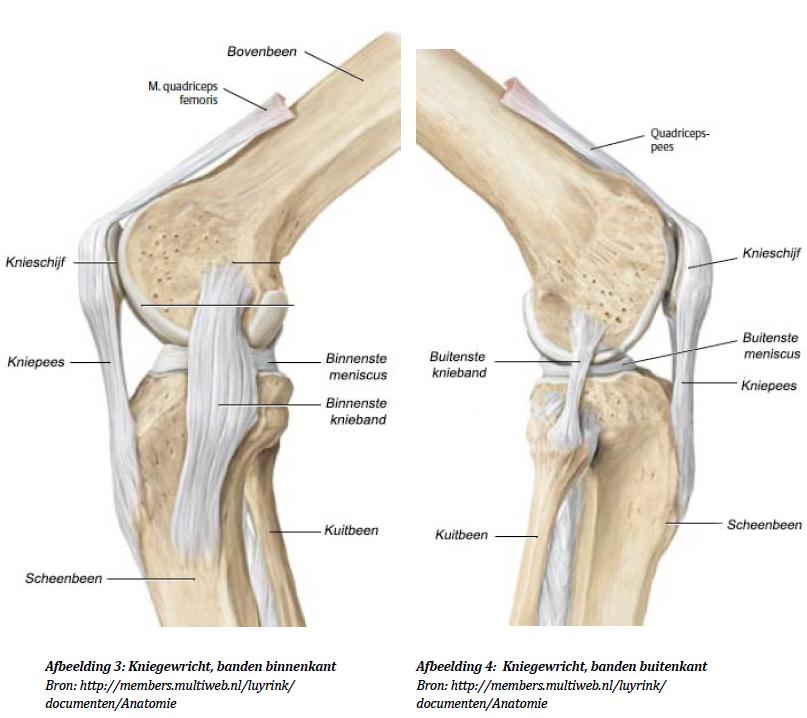Knie gewricht | Hapkido IJsselstein